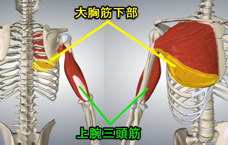 上腕三頭筋、大胸筋下部