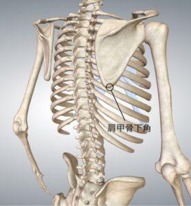 肩甲骨下角 |