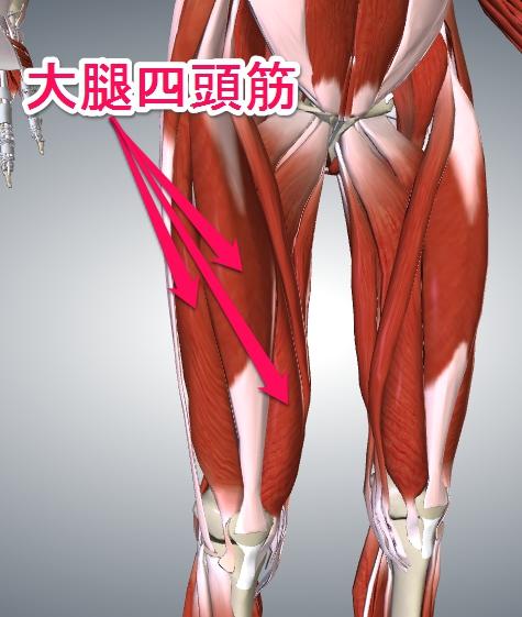 大腿四頭筋A