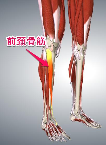前頚骨筋3
