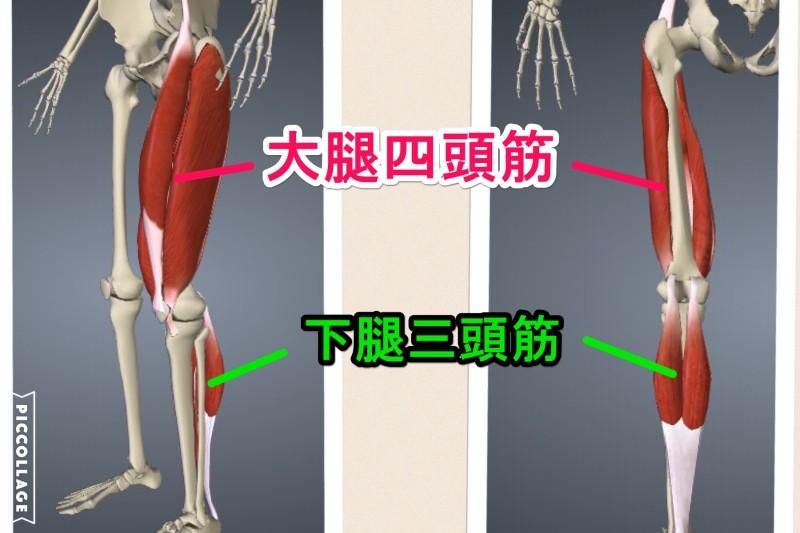 大腿四頭筋と下腿三頭筋